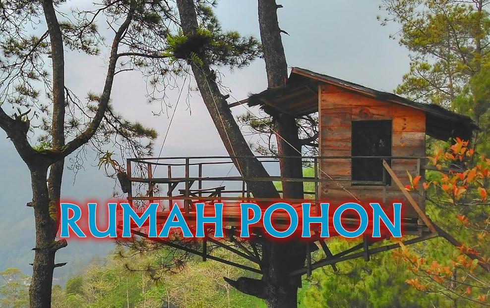 Rumah Pohon Yang Unik Di Gunung Banyak Jawa Timur