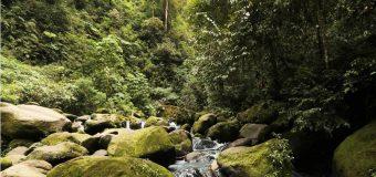 Lingkungan Hidup dan Pelestariannya